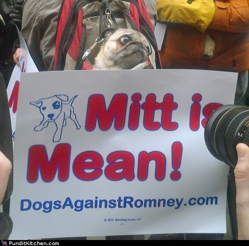 dogs,election 2012,Mitt Romney,political pictures,Republicans