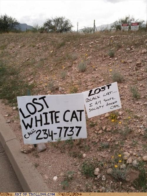 cat IRL lost racism sign - 5843885568