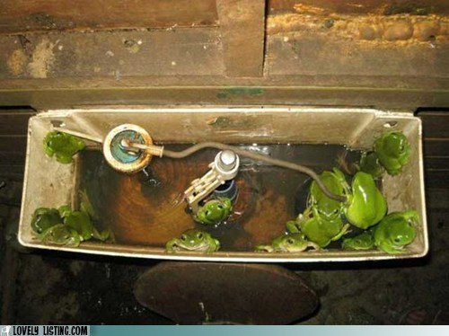 frogs,tank,toilet