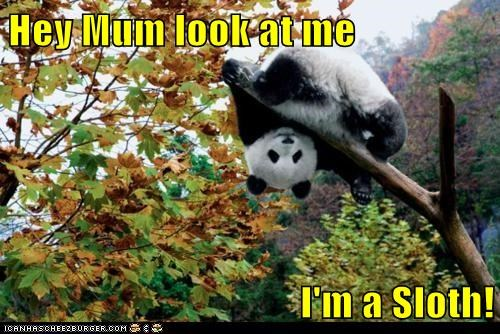 branch,caption,captioned,climbing,impersonation,impression,look,panda,panda bear,sloth,tree,upside down