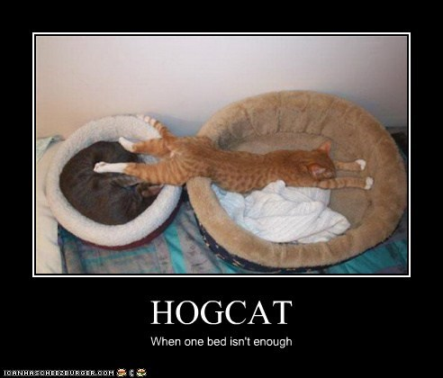 HOGCAT When one bed isn't enough