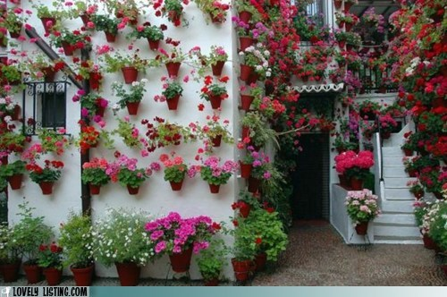 exterior geraniums outdoors plants pots