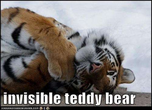 asleep big cat cat feline invisible invisible teddy bear sleep tiger tired - 5844879872