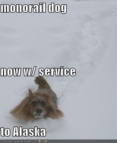 monorail dog snow whatbreed winter