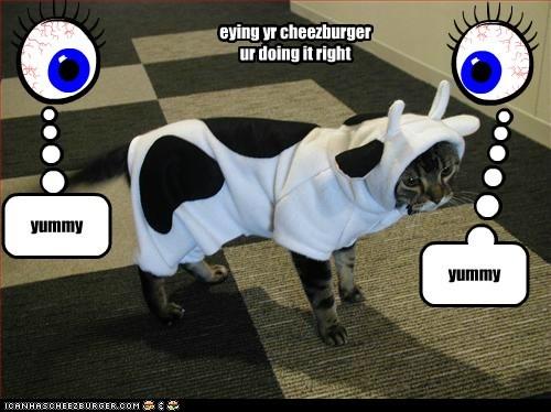 Cheezburger Image 5844951040