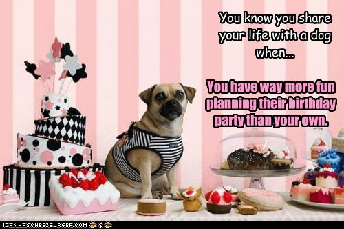 You know you share your life with a dog when... You have way more fun planning their birthday party than your own.