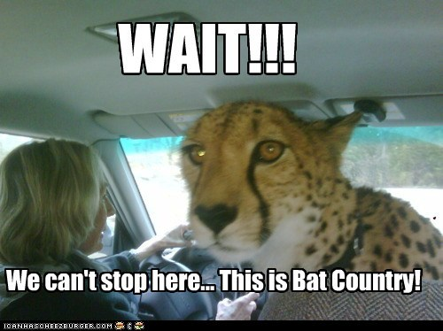 bat country car cheetah driving fear and loathing in las - 5845796864