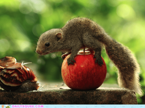 acting like animals,apple,balancing,challenge,imitating,jenga,pun,snail,snails,squirrel,standing