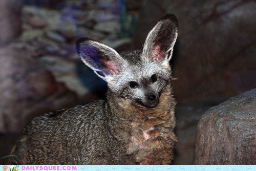 baby bat-eared fox derp derpy expression face fox kit priceless squee spree