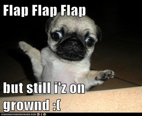 arms,best of the week,caption,dogs,flap,flapping,fly,flying,Hall of Fame,pug,Sad,wings,you can do it