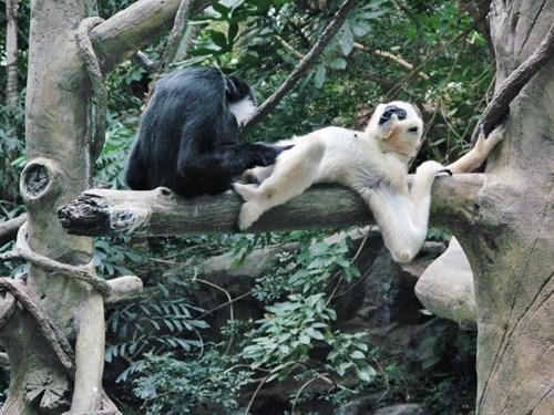 Funky Monkey Lunchtime Links monkey business monkeying around - 5846455040