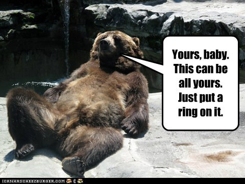 bear bears beyoncé caption if you like it lounging lyrics put a ring on it sexy single ladies single lady Songs