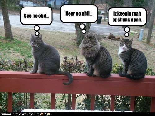 caption captioned cat Cats considering hear no evil impartial open options see no evil