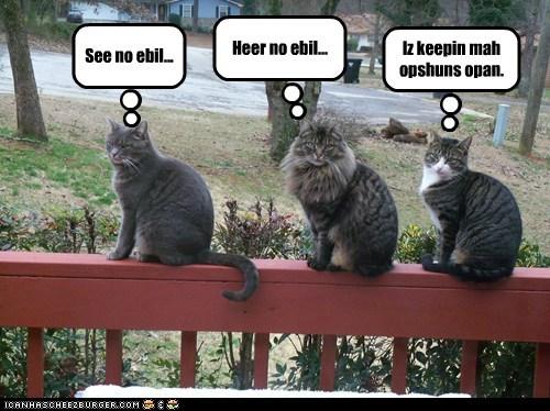 caption captioned cat Cats open options - 5846632704