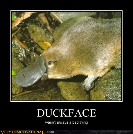awesome duckface hilarious platypus