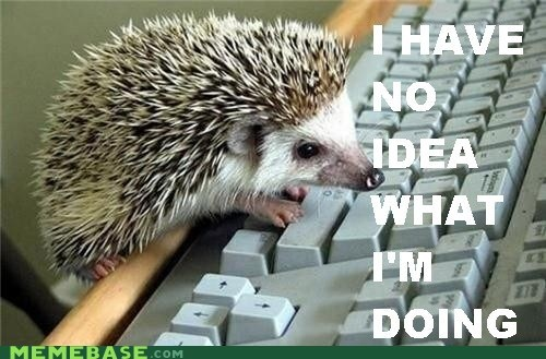 hedgehog Memes no-idea-what-im-doing typing - 5847279104