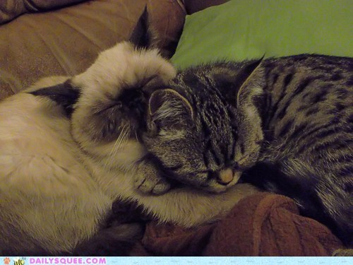 brother,brothers,cat,Cats,cuddling,kitten,love,reader squees,sleeping