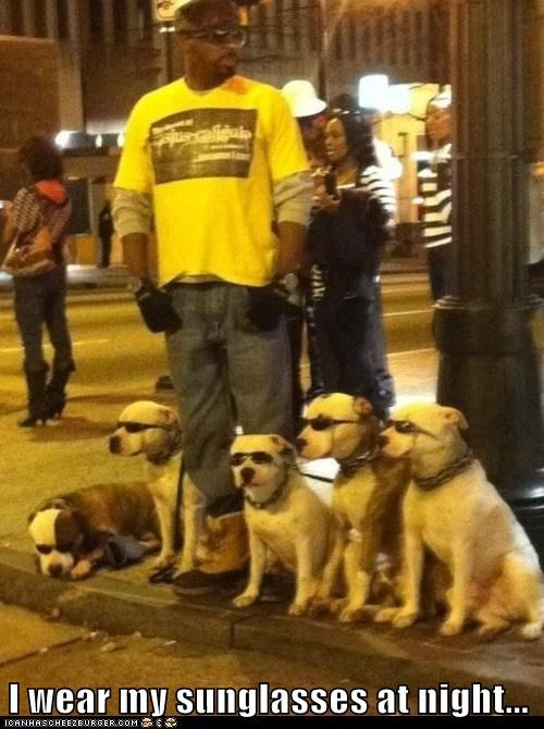 awesome,best of the week,Hall of Fame,pit bull,pit bulls,pitbull,pitbulls,sunglasses,sunglasses at night