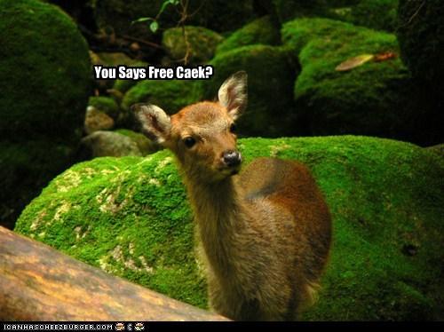 You Says Free Caek?