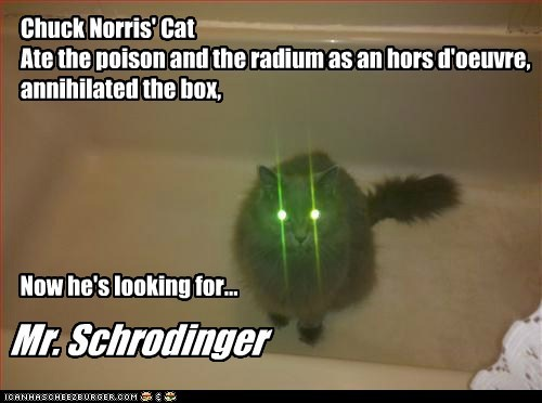 Chuck Norris' Cat Ate the poison and the radium as an hors d'oeuvre, annihilated the box, Now he's looking for... Mr. Schrodinger