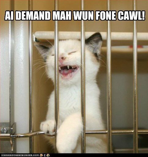 bars call caption captioned carrier cat demand jail kitten one phone shouting