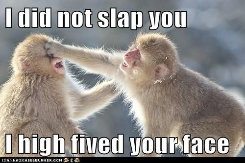 apes,high five,high five in the face,hit,monkeys,slap