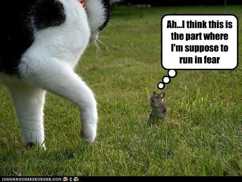 caption captioned cat danger dangerous fear idea impending mouse part run think this - 5849088768