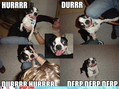 derp,extreme,goggie