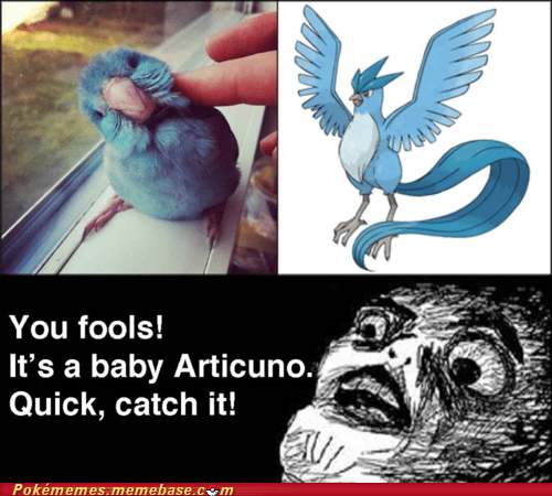 articuno,comic,IRL,quick ball,raisin face