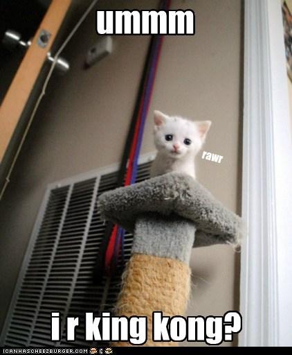 caption captioned cat king kong kitten rawr standing tiny - 5850738688