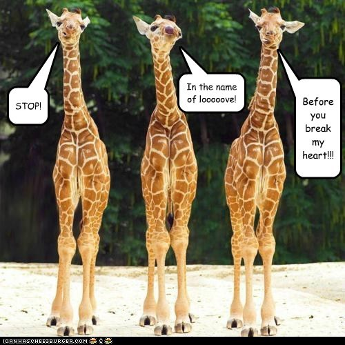 giraffes,singing,stop in the name of love
