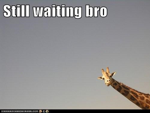bro,giraffes,patience,still waiting,waiting