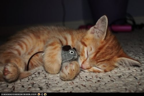 asleep cyoot kitteh of teh day mice sleeping toy mice toys