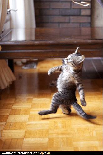 cyoot kitteh of teh day haters gonna hate human-like Memes standing strut strutting - 5851344384