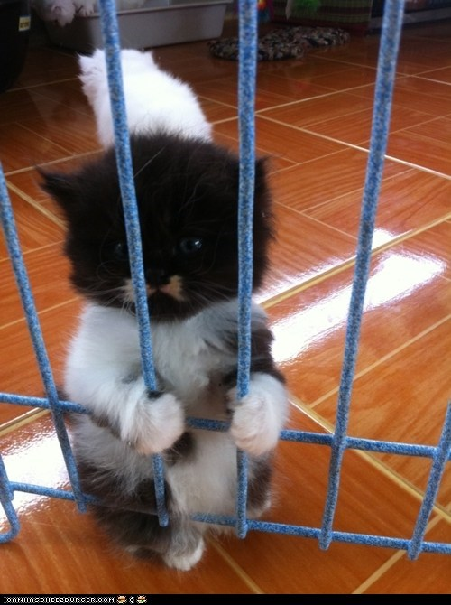 bars cyoot kitteh of teh day jail paws prison Sad standing