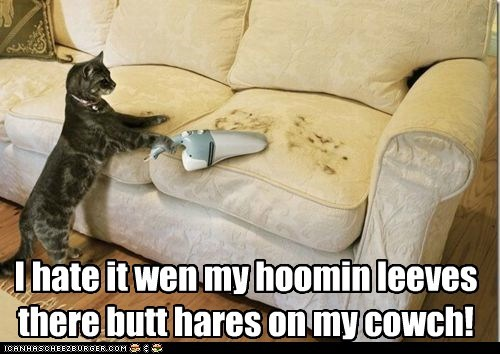 I hate it wen my hoomin leeves there butt hares on my cowch!