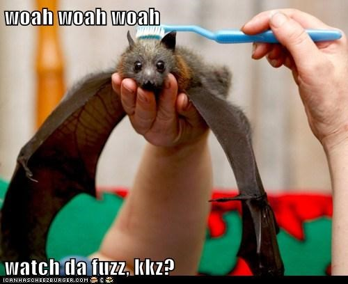 adorable baby bat bat best of the week brush brushing Hall of Fame - 5851640832
