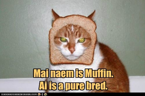 Mai naem is Muffin. Ai is a pure bred.