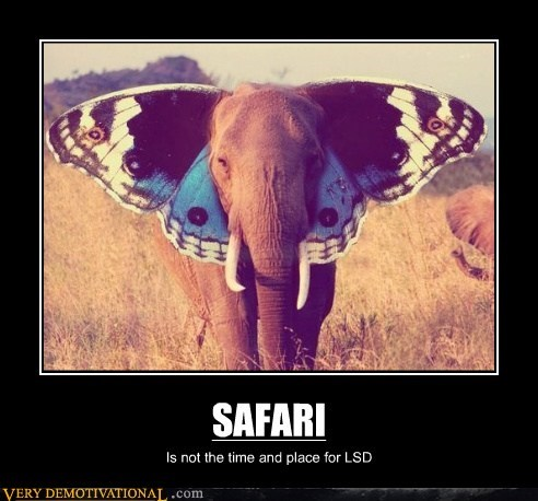 butterfly lsd elephant hilarious safari - 5853029632