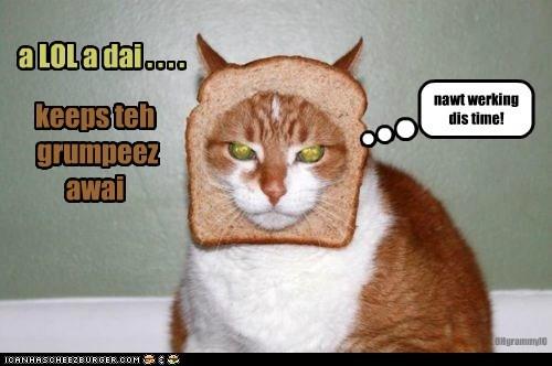 Cheezburger Image 5853062400