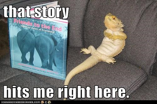 book lizard love story reading reptile story - 5853099776