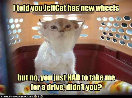 I told you JeffCat has new wheels but no, you just HAD to take me for a drive, didn't you? ___