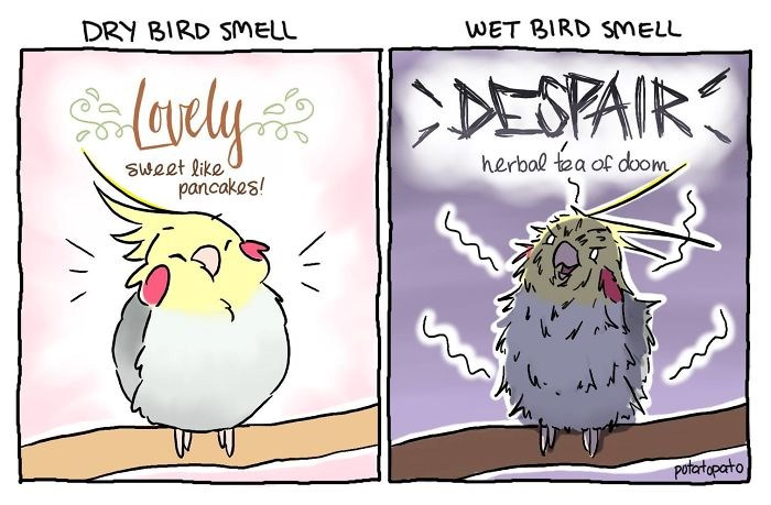 funny comics pets birds animal comics web comics - 5853445