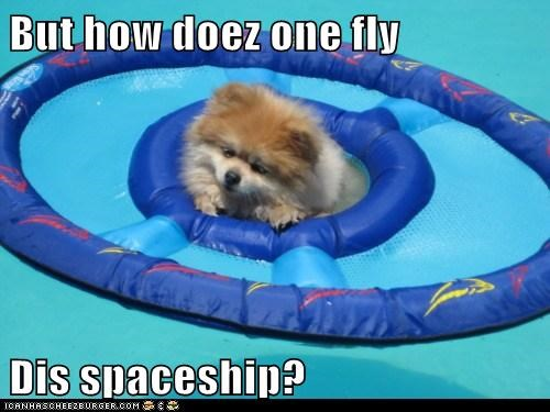 floating how pomeranian pool spaceship swimming - 5853447680