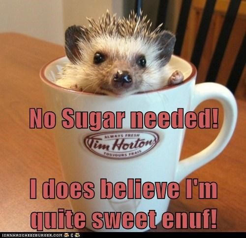 adorable coffee cup coffee mug hedgehog sweet tim hortons - 5853483776