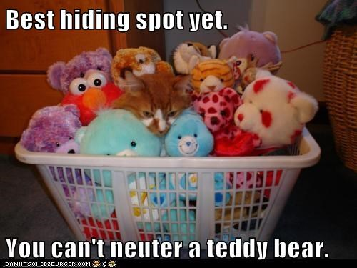 Best hiding spot yet. You can't neuter a teddy bear.