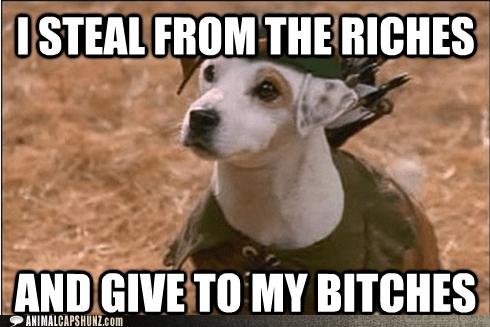 jack russell terrier - 5854398464