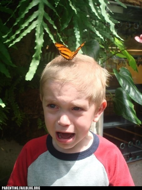 bugs butterfly get it off scared kid - 5854496768
