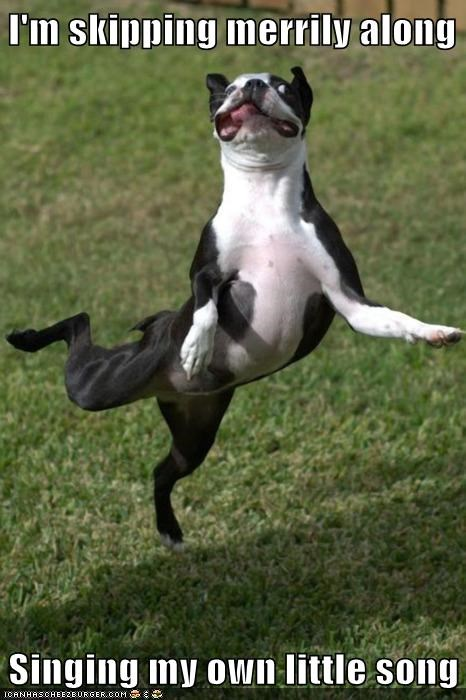 best of the week boston terrier crazy dance dancing dogs doin-my-own-thing goggies Hall of Fame happy jumping merry poses sing singing skipping Songs weird - 5854571008