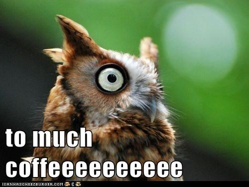 best of the week bird birds coffee Hall of Fame Owl too much coffee - 5854646528